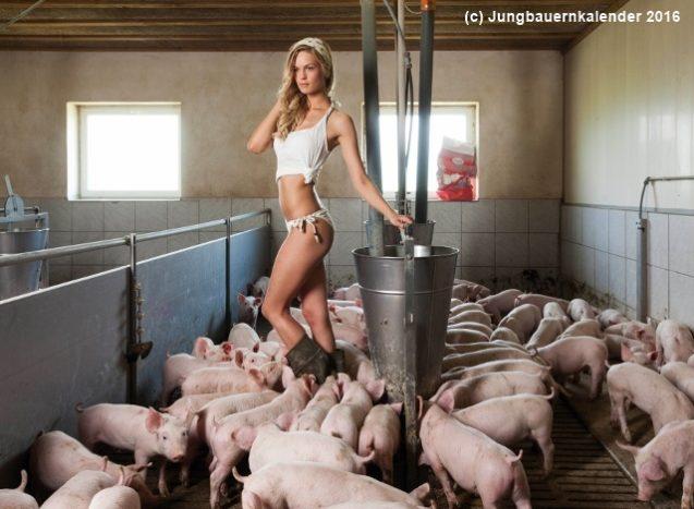 Positionspapier der BJB zur Schweinhaltung in Bayern