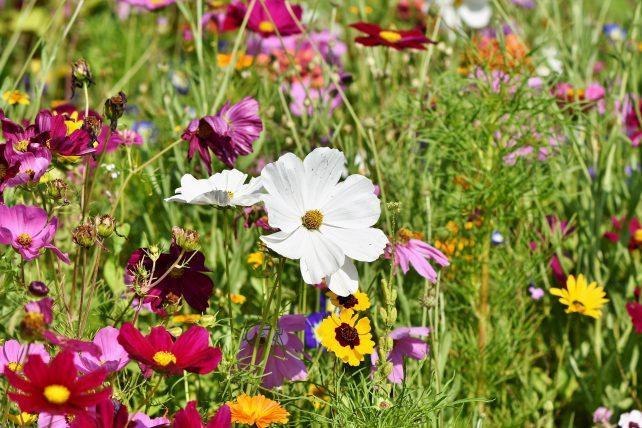 Artenvielfalt stärken – NEIN zum Volksbegehren!